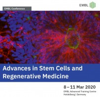 Advances in Stem Cells and Regenerative Medicine EMBL Conference